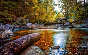 Picture autumn, forest, trees, stream, stones