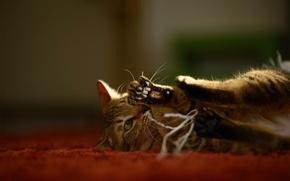 Picture cat, carpet, the game, Kote, thread