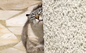 Wallpaper animal, Cat, home