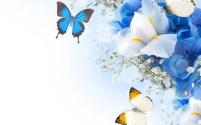 Picture butterfly, flowers, hydrangea