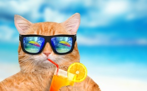 Wallpaper beach, funny, drink, summer, cat, glasses, vacation