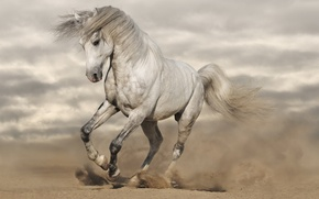 Picture sand, horse, dust, running, mane