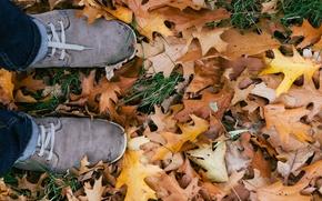 Picture autumn, leaves, sneakers, laces, oak, oak