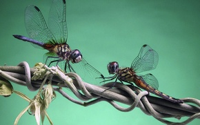 Picture branch, dragonfly, eel
