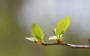 Picture greens, leaves, macro, light, heat, tree, branch, spring, green, leaves