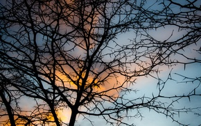 Picture the sky, clouds, branch, soft light, branch, sunset sky, sunset . blue