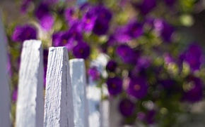 Picture white, purple, macro, flowers, background, widescreen, Wallpaper, the fence, blur, the fence, wallpaper, flowers, widescreen, ...