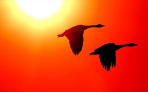 Wallpaper birds, the sky, nature