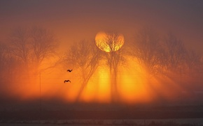 Picture the sun, trees, sunset, birds, fog, wire