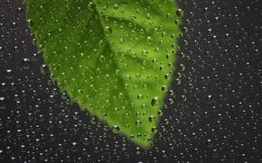 Picture glass, rain, drop, window, sheets, glass, casting