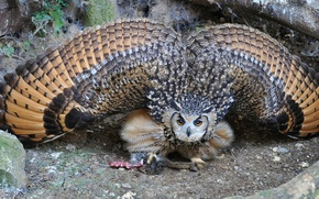 Picture owl, wings, owl