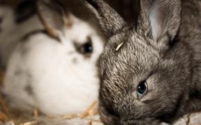 Picture animals, Wallpaper, rabbits, kids, rabbits