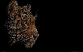Picture tiger, background, black