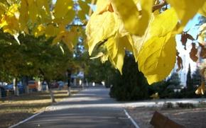 Picture autumn, leaves, nature, Ukraine