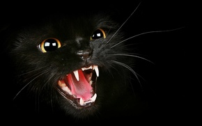 Picture cat, black, fangs