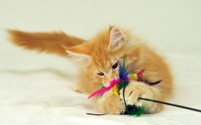 Picture toy, cat, plays