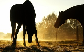 Picture the sun, shadows, Horse, weed
