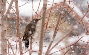Picture bird, winter, tree, snowing