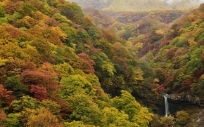 Picture forest, trees, landscape, foliage, waterfall