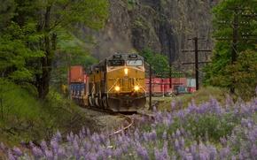 Picture nature, rails, train, railroad, locomotive