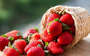 Picture berries, strawberry, basket