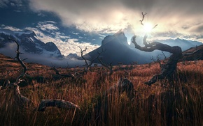 Picture the sky, grass, the sun, mountains, Andes, Lama, driftwood, Patagonia, Wallpaper from lolita777