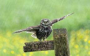 Picture rain, bird, the fence