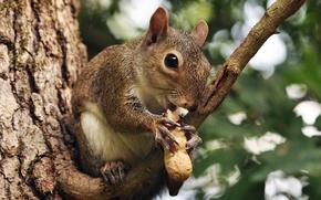 Picture tree, branch, walnut, protein