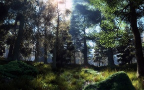 Picture forest, the sun, trees, stones, moss
