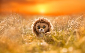Picture eyes, reflection, toy, Leo, Zebra, Africa, lion