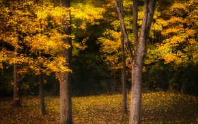 Picture autumn, forest, leaves, trees, yellow