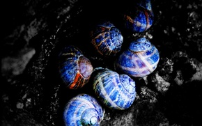 Picture black, color, shell