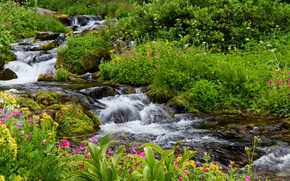 Wallpaper flowers, the bushes, moss, greens, stream, grass, Mount Rainier National Park, stones, USA