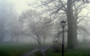 Picture grass, trees, nature, fog, track, lantern