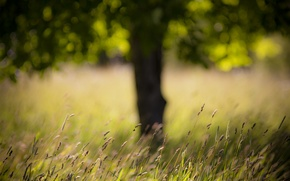 Picture field, grass, tree