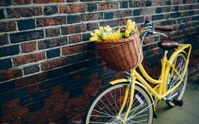 Picture flowers, bike, tulips