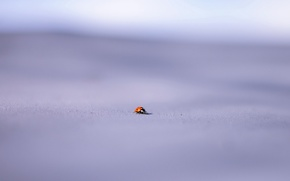 Picture macro, background, ladybug