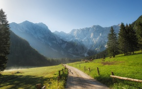 Picture road, mountains, morning, ate, valley, cows, Slovenia