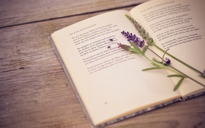 Picture table, book, lavender, poems