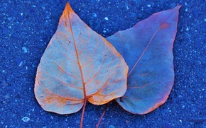 Picture autumn, asphalt, leaves, paint