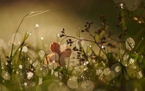 Picture grass, macro, Rosa, glare, morning