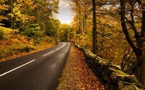 Picture road, autumn, nature, markup