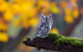Picture eyes, look, nature, owl, moss, log, bird, owl, eared