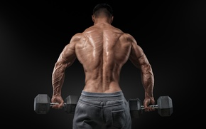 Picture men, muscular, bare back