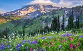 Picture clouds, trees, flowers, mountains, nature, hills, glade, USA