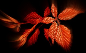 Picture autumn, leaves, background, color