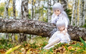 Picture forest, doll, birch