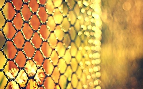 Picture flowers, mesh, the fence, blur, metal, bokeh