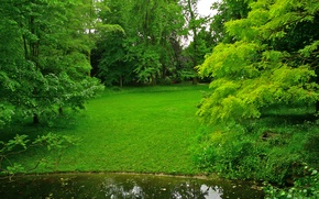 Picture greens, grass, trees, pond, Park, France, lawn, Albert-Kahn Japanese gardens