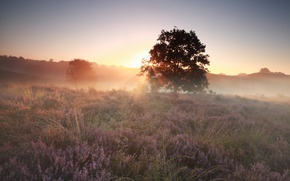 Picture sunset, fog, Flowers, Heather